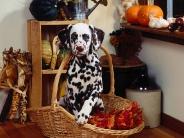 dog_wallpaper_148