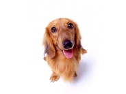 dog_wallpaper_150