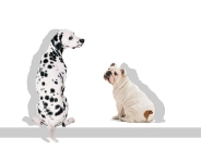 dog_wallpaper_152