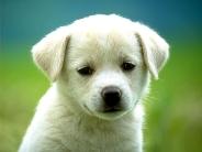 dog_wallpaper_160