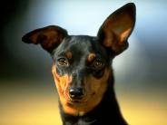 dog_wallpaper_163