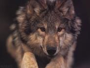 dog_wallpaper_171
