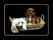 dog_wallpaper_174