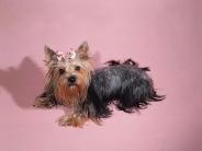 dog_wallpaper_176