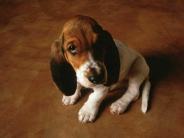 dog_wallpaper_177