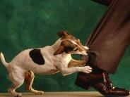 dog_wallpaper_178