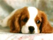 dog_wallpaper_182