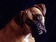 dog_wallpaper_186
