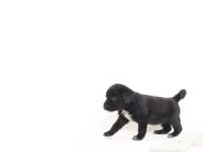 dog_wallpaper_207