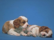 dog_wallpaper_208