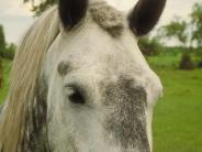horse_wallpaper_102