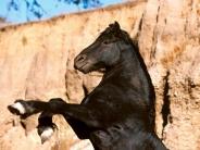 horse_wallpaper_103