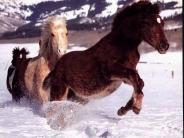 horse_wallpaper_105