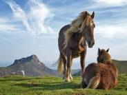 horse_wallpaper_107