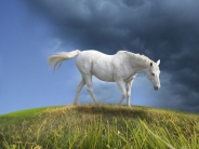 horse_wallpaper_172