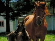 horse_wallpaper_173
