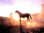 horse_wallpaper_174