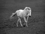 horse_wallpaper_175