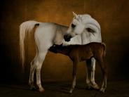 horse_wallpaper_178