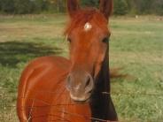 horse_wallpaper_180