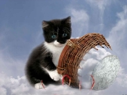 cat_wallpaper_103