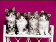 cat_wallpaper_106
