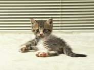 cat_wallpaper_109