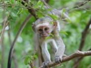 monkey_wallpaper_12