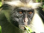 monkey_wallpaper_14