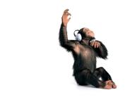 monkey_wallpaper_20