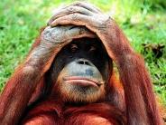 monkey_wallpaper_21
