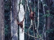 monkey_wallpaper_22