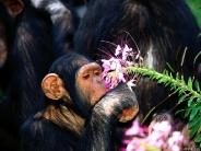 monkey_wallpaper_25