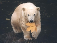 bear_wallpaper_112