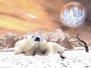 bear_wallpaper_113