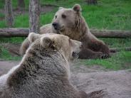 bear_wallpaper_30