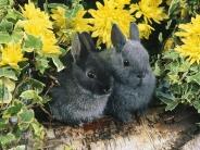rabbit_wallpaper_1