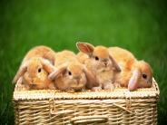 rabbit_wallpaper_10