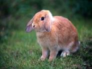 rabbit_wallpaper_11