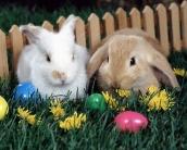 rabbit_wallpaper_13