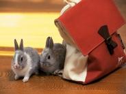 rabbit_wallpaper_14