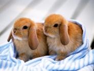 rabbit_wallpaper_15