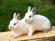 rabbit_wallpaper_16