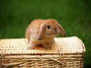 rabbit_wallpaper_17