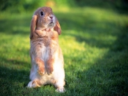 rabbit_wallpaper_18
