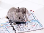 rabbit_wallpaper_19