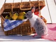 rabbit_wallpaper_2