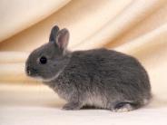 rabbit_wallpaper_21