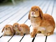 rabbit_wallpaper_22