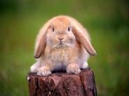 rabbit_wallpaper_23